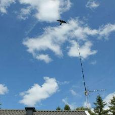 Komplett Fågelskrämma Höken -